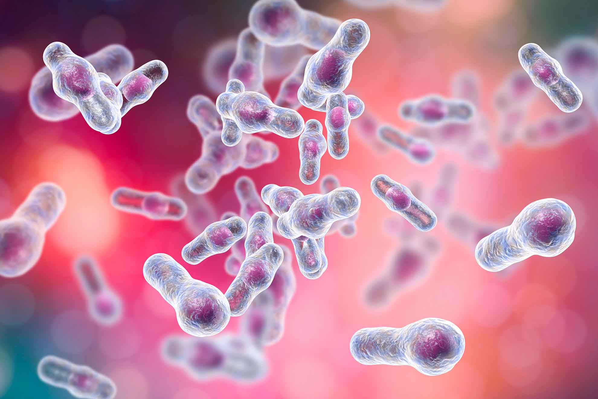 """Besonders häufig nimmt der Keim """"Clostridium difficile"""" im Darm Überhand und führt zu Problemen: Bis zu 20 % der Antibiotika-assoziierten Durchfälle (AAD) werden durch dieses schädliche Bakterium ausgelöst – im Fachjargon spricht man dann von der Clostridium-difficile-assoziierten Diarrhö (CDAD)."""