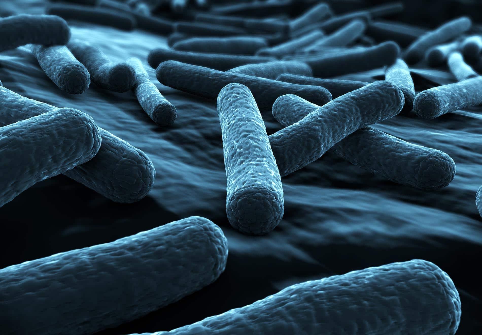 Bakterien vom Stamm E. coli sind sehr häufig für Durchfälle im Urlaub verantwortlich.