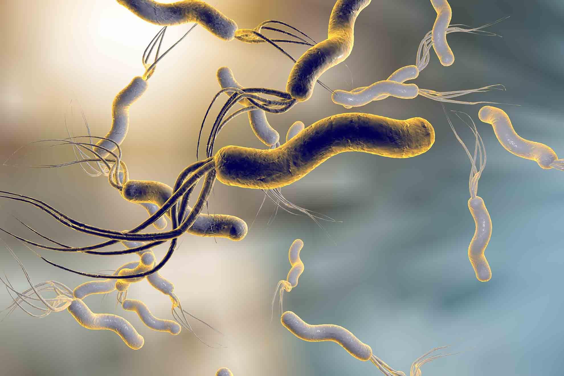 Etwa 80% aller Fälle von chronischer Gastritis sind vom Typ B. Meist werden sie vom Bakterium Helicobacter pylori verursacht