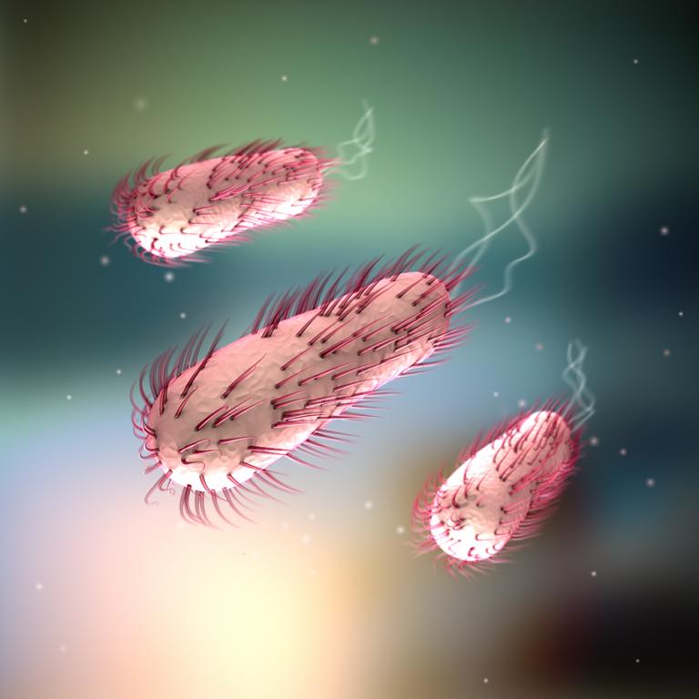 Pathogene Bakterien im Detail