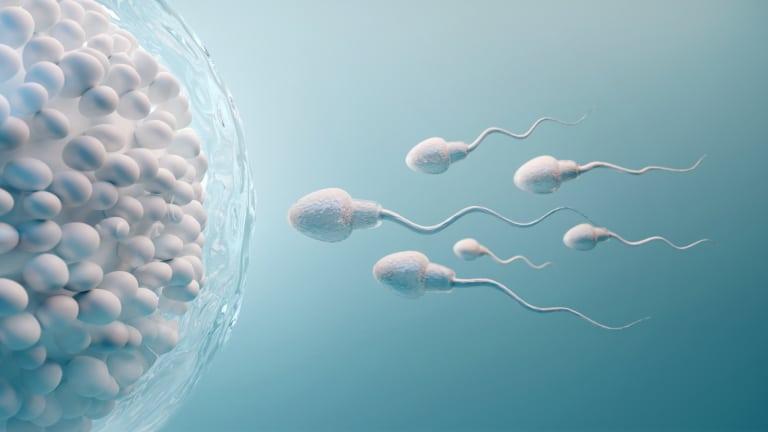 Vaginalflora und Fruchtbarkeit