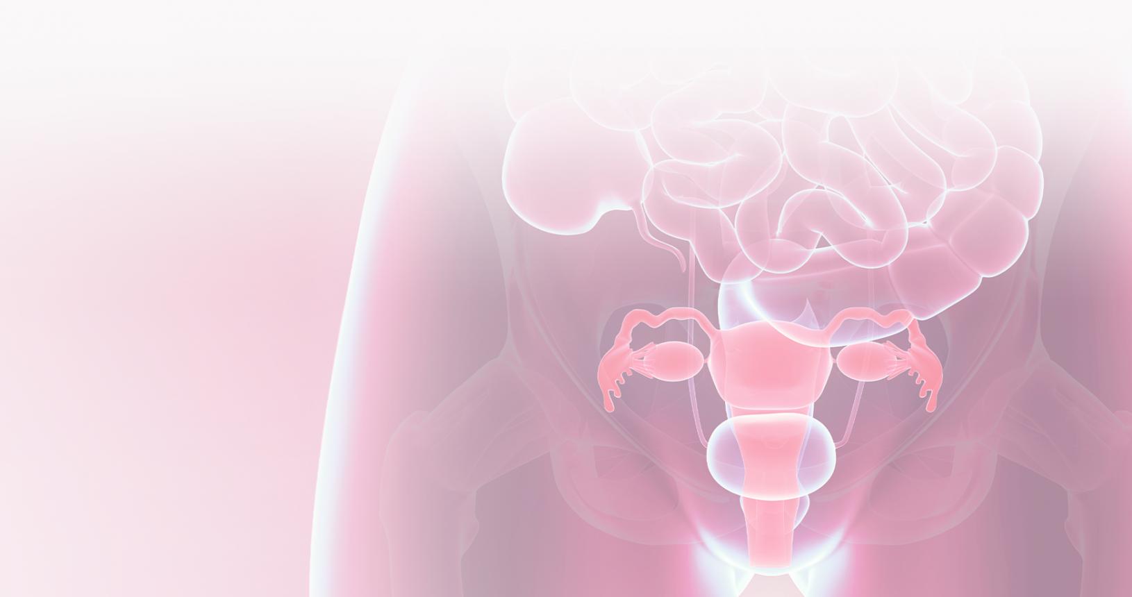 Kostenloser Ratgeber: Lesen Sie alles rund um bakterielle Vaginose, Scheidenpilz, Honeymoon-Zystitis, Scheidentrockenheit, Menopause uvm. nach.
