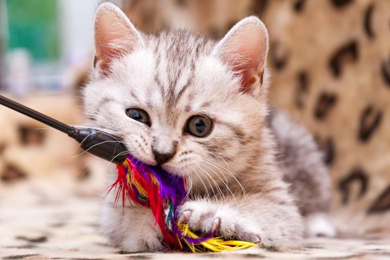 Die Darmflora von Hund und Katz
