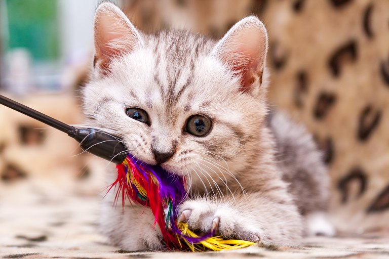 Was Sie gegen Stress bei Ihrem Haustier tun können