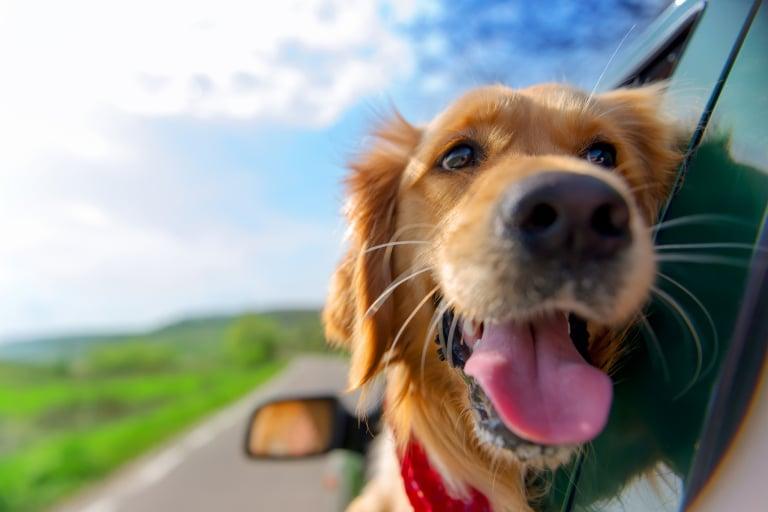 Wie transportiere ich mein Haustier artgerecht in den Urlaub?