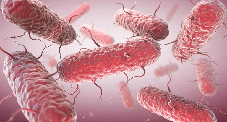 Parkinson und Darmbakterien