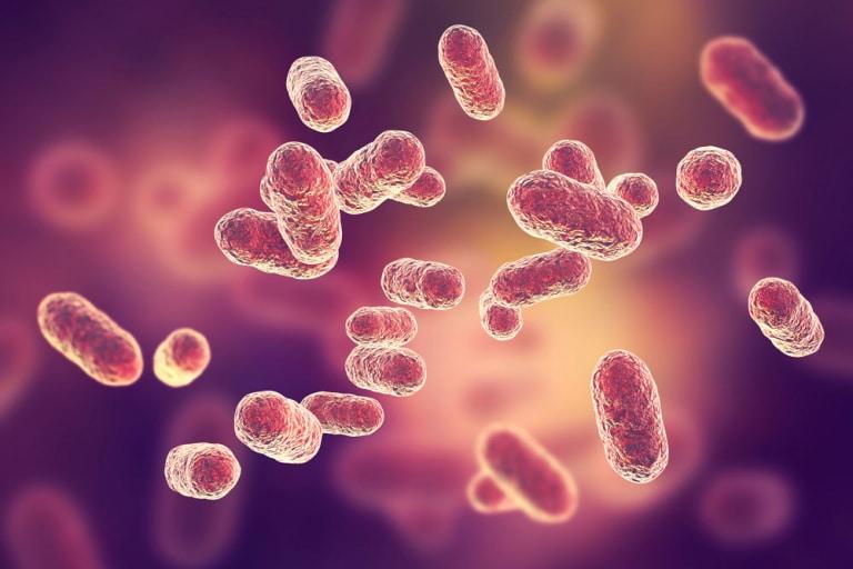 Die Waffen der Darmbakterien gegen Viren
