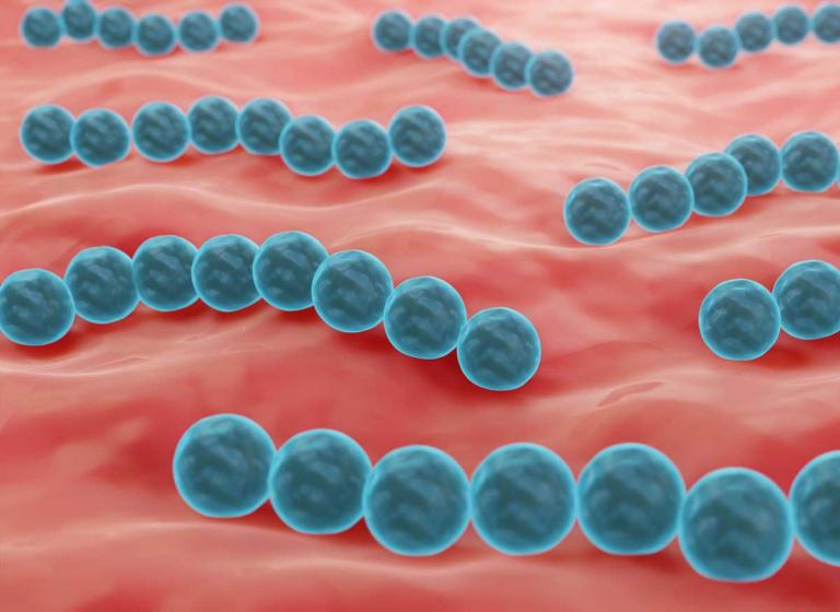Mundmikrobiom probiotische Streptokokken