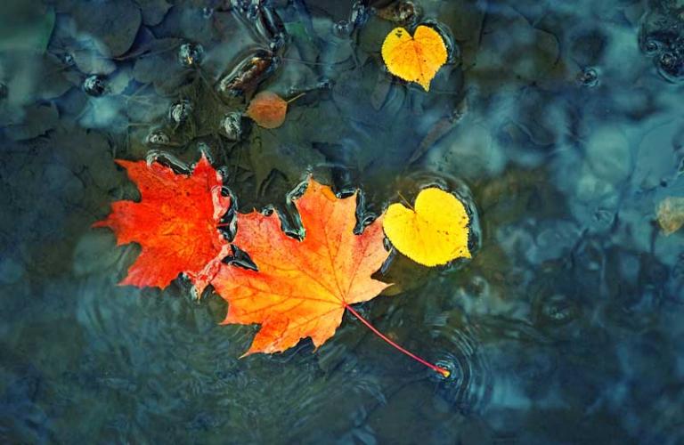 Stressfrei durch den Herbst